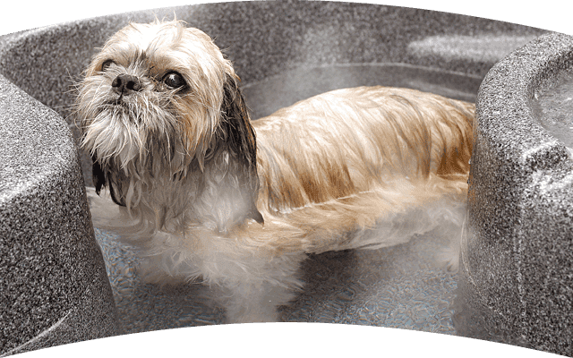 Enjoy the open air hotspring with your dog
